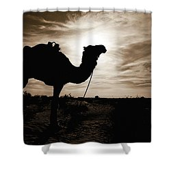 Silhouetted Camel, Sahara Desert, Douz Shower Curtain