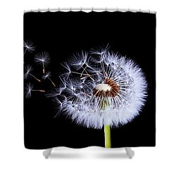 Silhouettes Of Dandelions Shower Curtain
