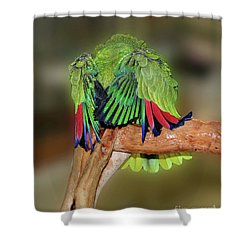 Silly Amazon Parrot Shower Curtain by Smilin Eyes  Treasures