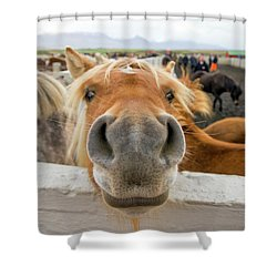 Silly Icelandic Horse Shower Curtain