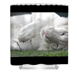 Silly Kitty Shower Curtain by Amanda Eberly-Kudamik
