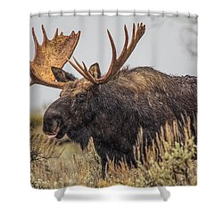 Silly Moose  Shower Curtain