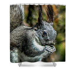 Silver Abert's Squirrel Close-up Shower Curtain by Marilyn Burton