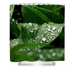 Silver Drops Of Spring Shower Curtain