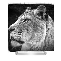 Shower Curtain featuring the photograph Silver Lioness - Squareformat by Chris Boulton