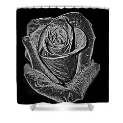 Silver Rose Shower Curtain