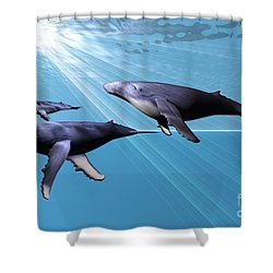 Silver Sea Shower Curtain by Corey Ford