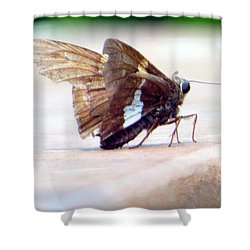 Silver Spotted Skipper Butterfly Shower Curtain