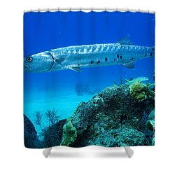 Silver Stalker Shower Curtain