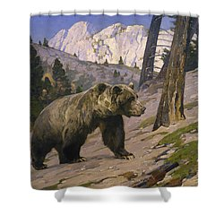Silver Tip Grizzly Bear - Rocky Mountains, Alberta Shower Curtain