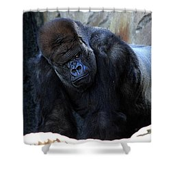 Silverback Kibabu Rules His Kingdom Shower Curtain