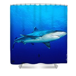 Silvertip Shark In Thailand Shower Curtain by Dave Fleetham - Printscapes