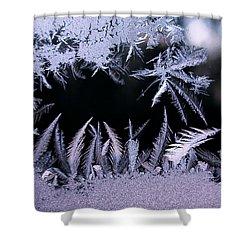 Silvery Window Fronds Shower Curtain by Liz Allyn