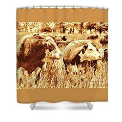 Simmental Bull 3 Shower Curtain