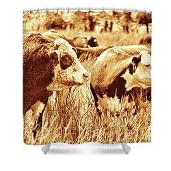 Shower Curtain featuring the photograph Simmental Bull 3 by Larry Campbell