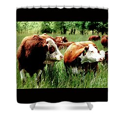 Shower Curtain featuring the photograph Simmental Bull And Hereford Cow by Larry Campbell