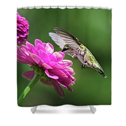 Shower Curtain featuring the photograph Simple Pleasure Hummingbird by Christina Rollo