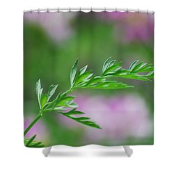 Shower Curtain featuring the photograph Simplicity by Ramona Whiteaker