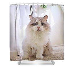 Simply Beautiful Shower Curtain