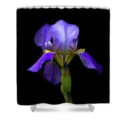 Simply Stunning Shower Curtain by Penny Meyers