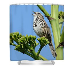 Shower Curtain featuring the photograph Sing A Song by Fraida Gutovich