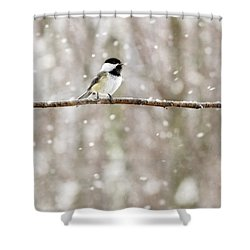 Sing Chickadee Sing Shower Curtain by Angie Rea