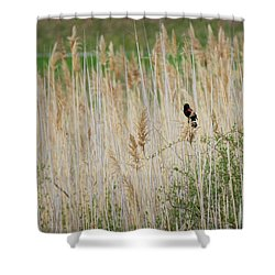 Shower Curtain featuring the photograph Sing For Spring by Bill Wakeley