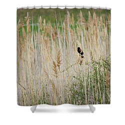 Shower Curtain featuring the photograph Sing For Spring Square by Bill Wakeley