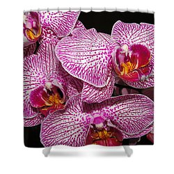 Singapore Orchid Shower Curtain