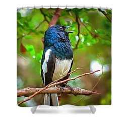 Singing Ceylonese Robin-magpie Shower Curtain
