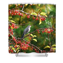 Shower Curtain featuring the photograph Singing For His Supper - Northern Mockingbird In The Berries by Kerri Farley