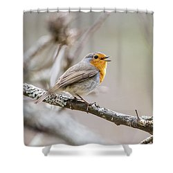 Singing Robin Shower Curtain by Torbjorn Swenelius