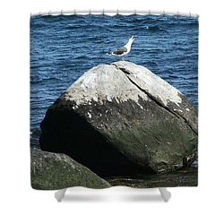 Shower Curtain featuring the digital art Singing Seagull by Barbara S Nickerson