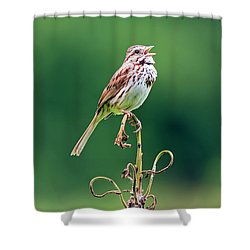 Singing Song Sparrow Shower Curtain