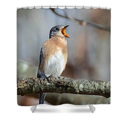 Singing This Song For You Shower Curtain by Amy Porter