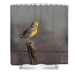 Shower Curtain featuring the photograph Singing Warbler by Debby Pueschel