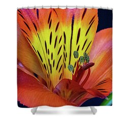 Single Alstroemeria Inca Flower-1 Shower Curtain