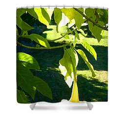 Single Angel's Trumpet Shower Curtain