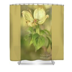 Shower Curtain featuring the digital art Single Dogwood Blossom In Evening Light by Lois Bryan