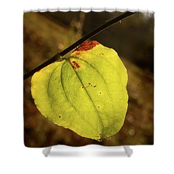 Single Greenbrair Leaf In Evening Sun Shower Curtain