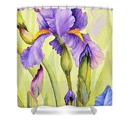 Single Iris Shower Curtain