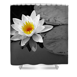 Shower Curtain featuring the photograph Single Lily by Shari Jardina