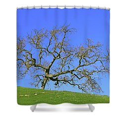 Shower Curtain featuring the photograph Single Oak Tree by Art Block Collections