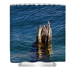 Single Old Piling 3 Vertical Shower Curtain