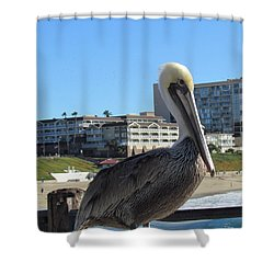 Shower Curtain featuring the photograph Single Pelican On The Pier by Bonnie Muir