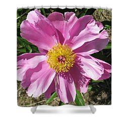 Single Pink Peony Shower Curtain