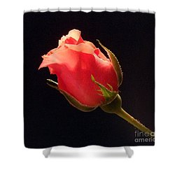 Single Pink Rose Bud Shower Curtain