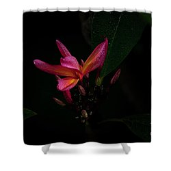 Single Red Plumeria Bloom Shower Curtain