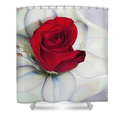 Single Red Rose In Fenton Vase Shower Curtain