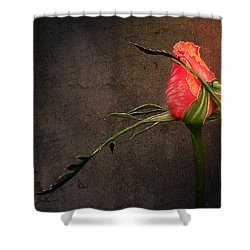 Single Rose Shower Curtain by Ann Lauwers